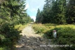 szeroki szlak prowadzący w kierunku Palenicy