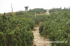 szlak prowadzący na szczyt Pilska