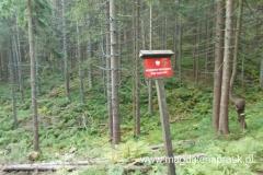 przejście czerwonym szlakiem w kierunku Przełęczy Glinne