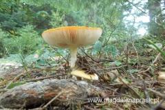 grzyby różnego kształtu i koloru