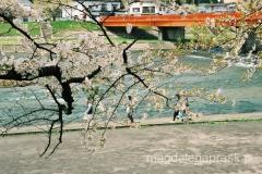 wiosna w Japonii to przede wsztstkim wyczekiwanie na kwitnienie wiśni