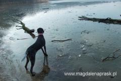 mimo bardzo łagodnej zimy Jezioro Góreckie nieco zamarzmnięte