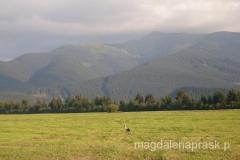 z pięknym widokiem na Tatry