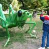 inwazja owadów gigantów w Poznaniu