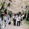 hanami czyli w Japonii zakwitły wiśnie
