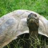 zmarł żółw George